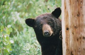 "3 Tips to ""Keeping the Bears Away"" & Getting Back On Track"